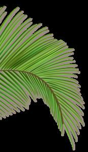 palm-left